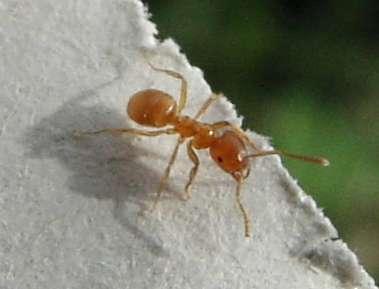 Mierenplaag voorkomen