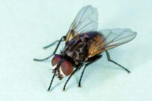 Vliegenplaag voorkomen